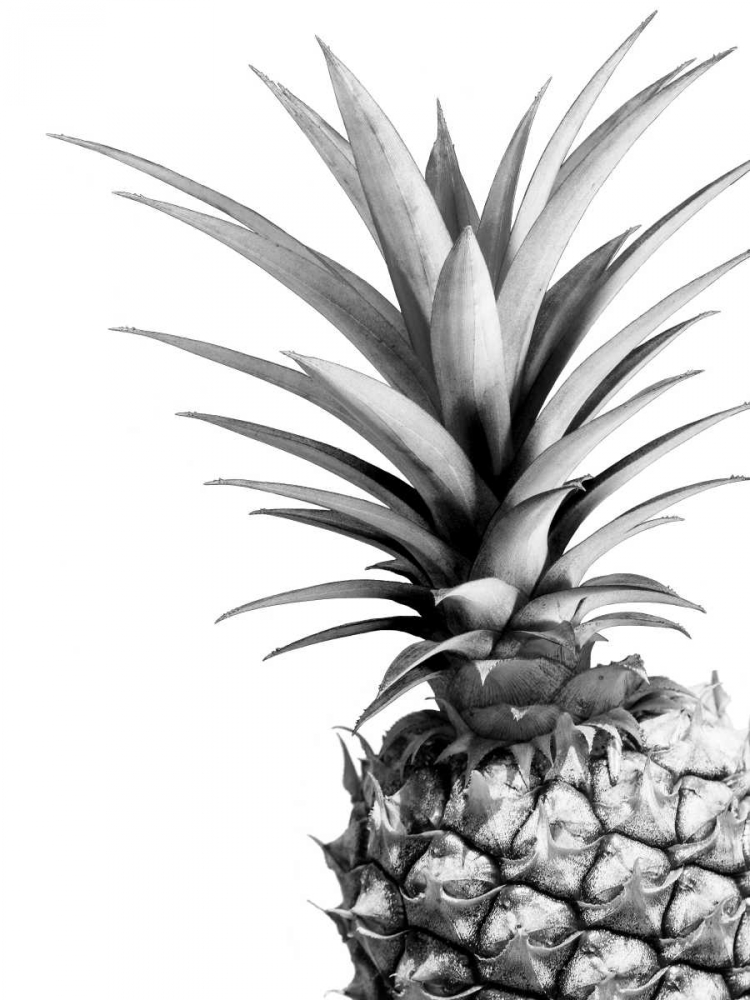 Pineapple - BW Greer, Lexie 151307