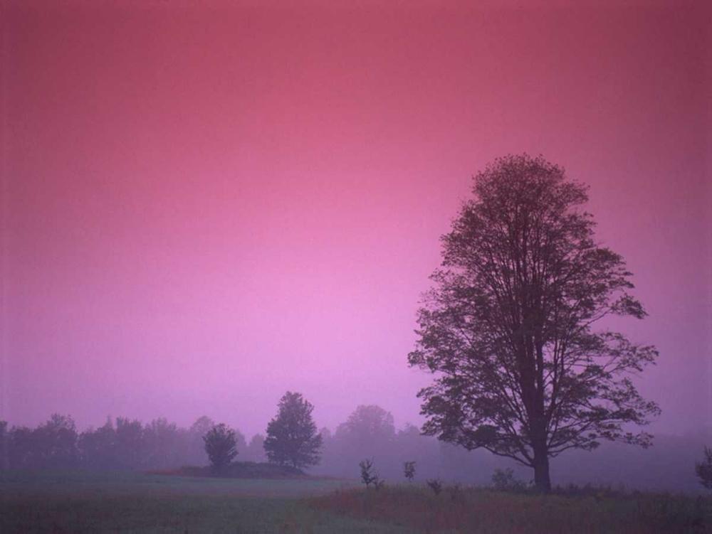 Evening Fields PhotoINC Studio 140125