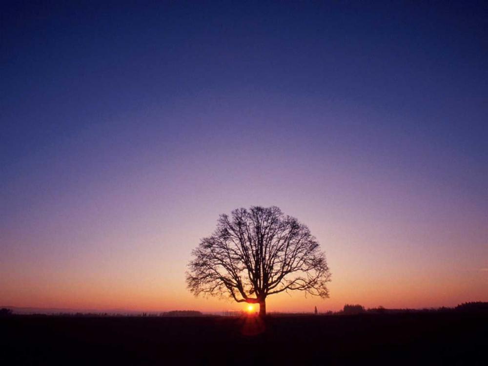 Sundown PhotoINC Studio 140192