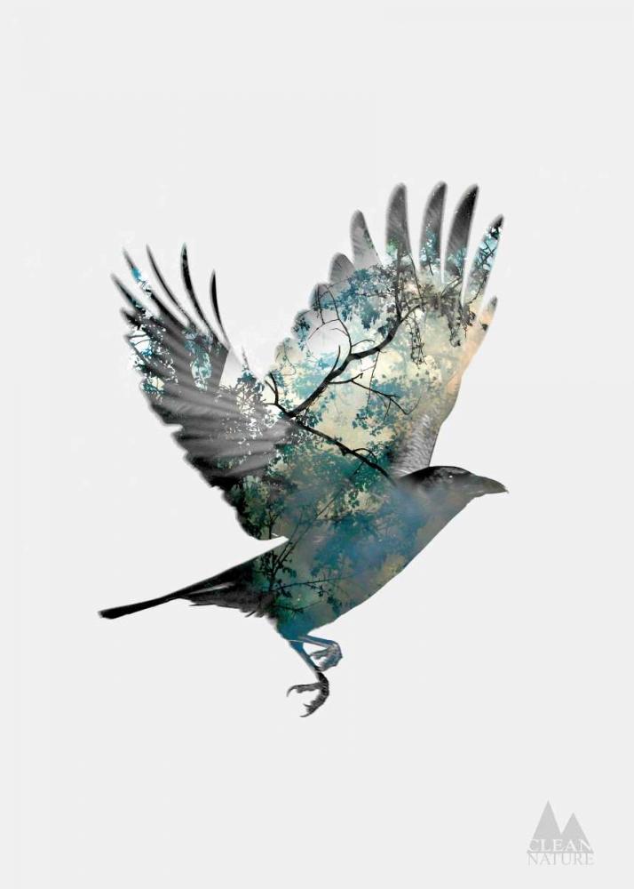 Bird Clean Nature 139815