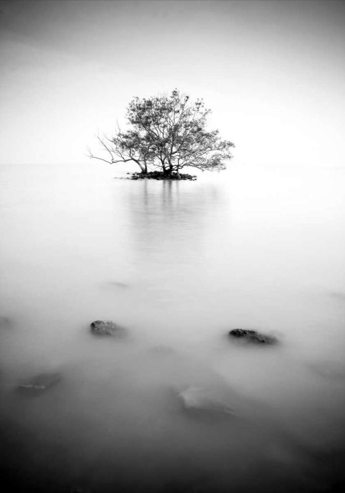 In the mist PhotoINC Studio 140138