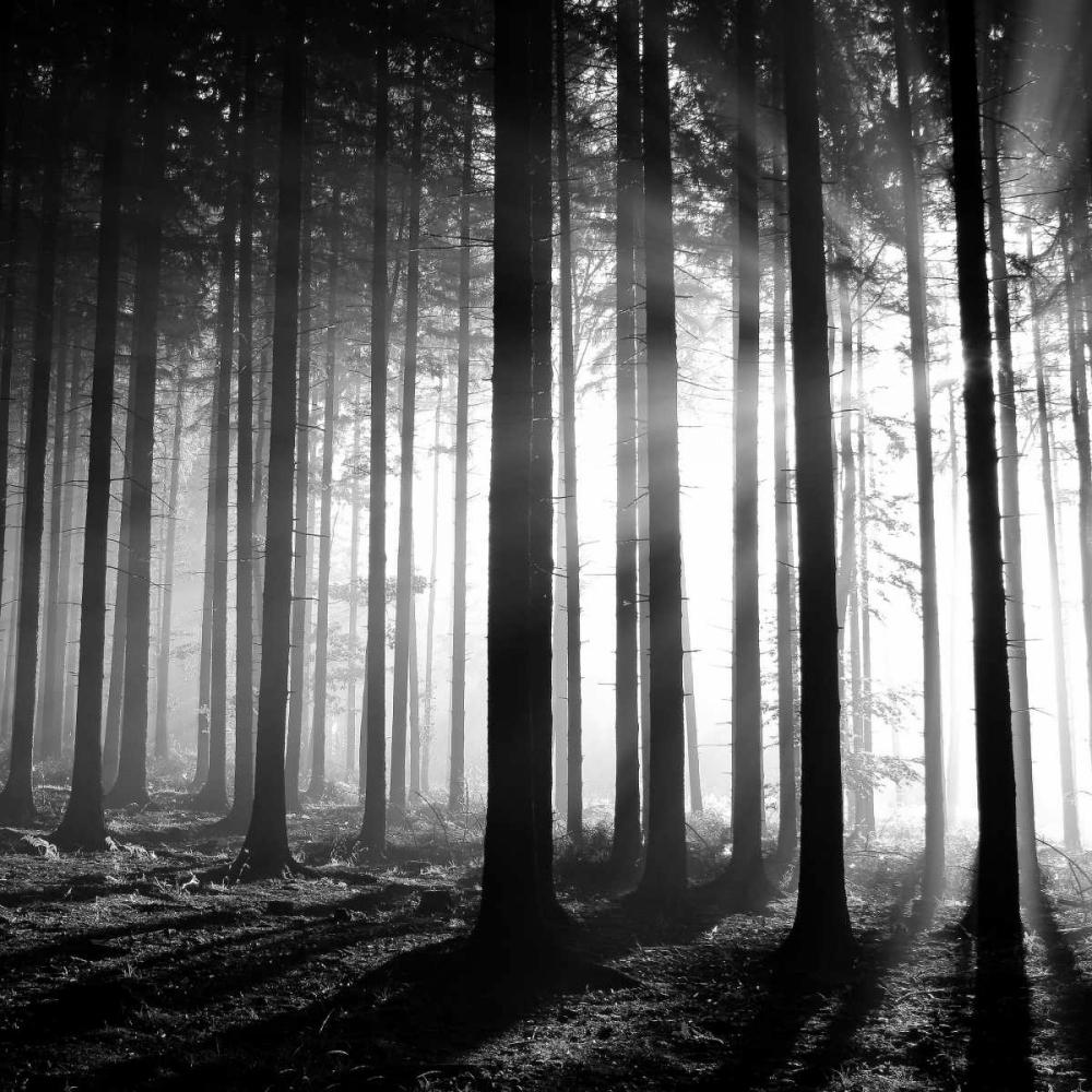 Wood Light PhotoINC Studio 140217