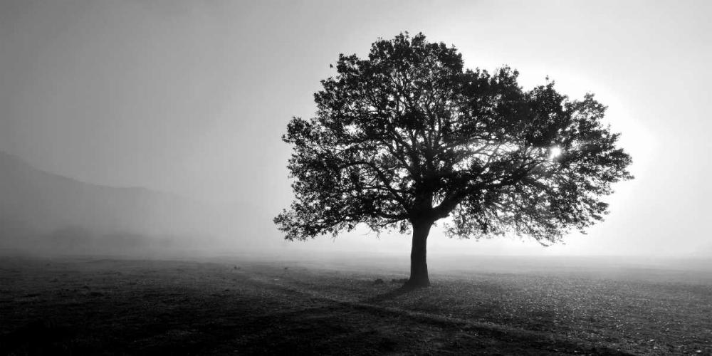 Tree in Mist PhotoINC Studio 140200