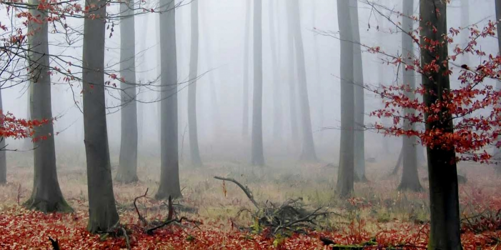 Misty Woods PhotoINC Studio 66253