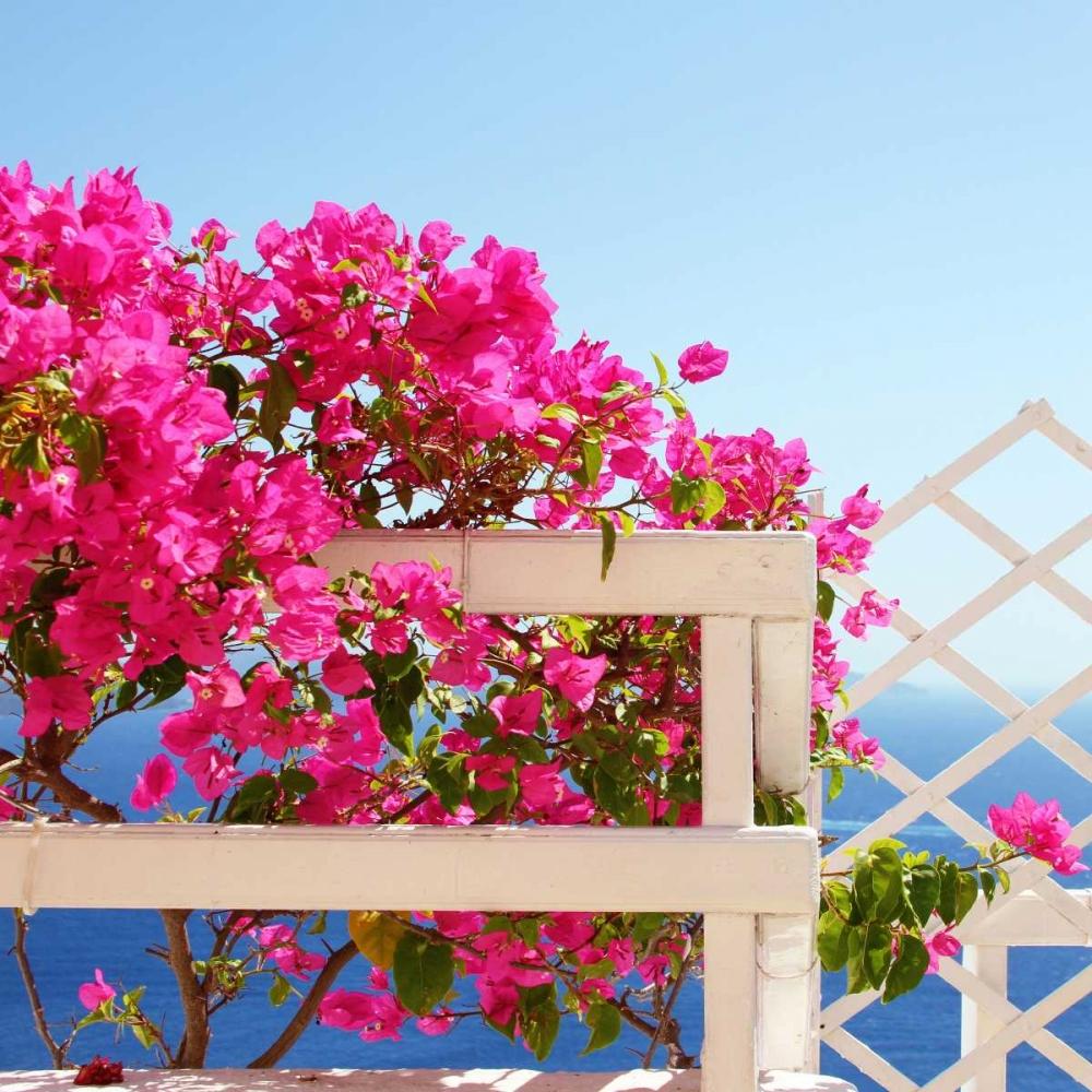 Santorini Blooms Coomes, Sylvia 119616
