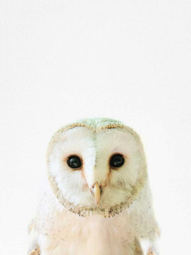 Owl Tai Prints 119554