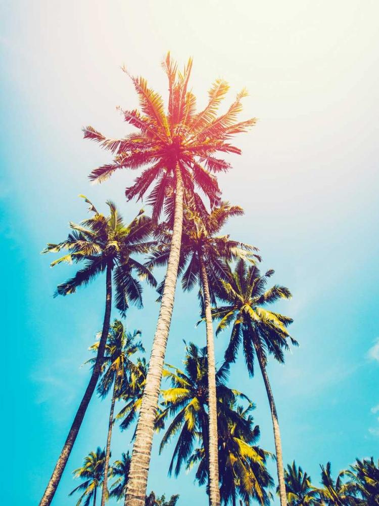 Palms in the Sun Tai Prints 119608