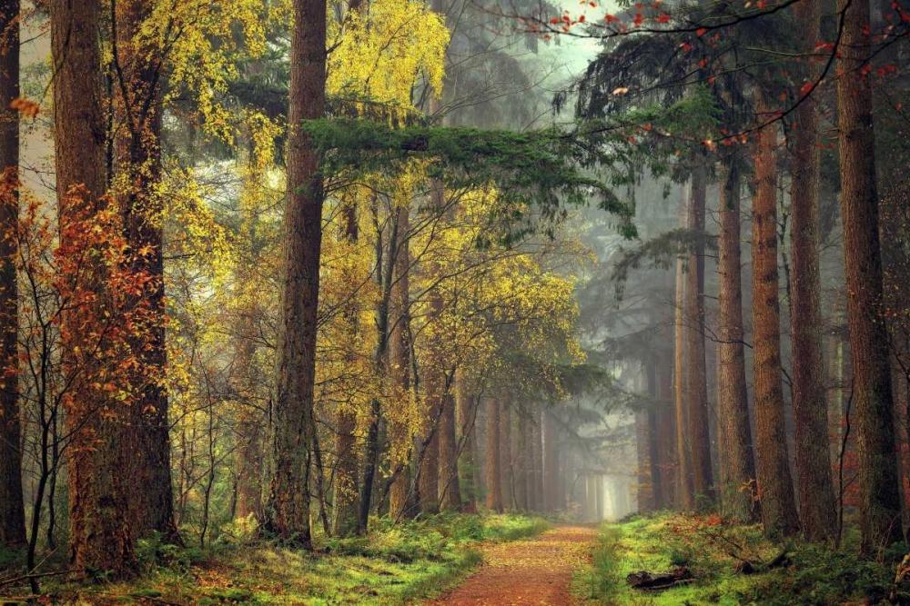 Colors of the Forest Van de Goor, Lars 33270