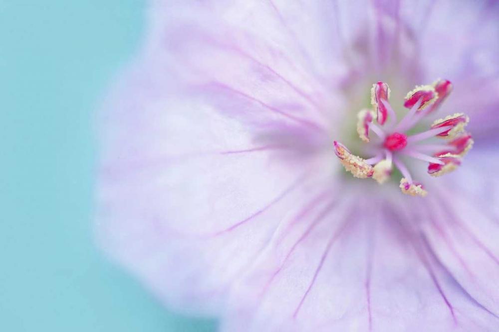 The Heart of a Flower Gardner, Sarah 74010