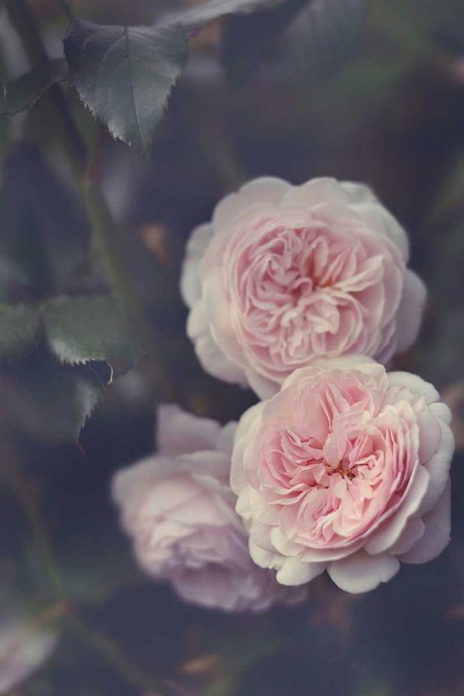 Hiding Blooms Gardner, Sarah 160133