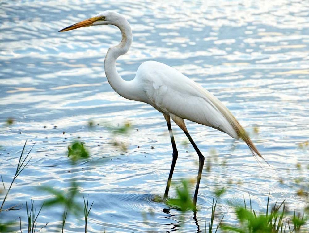 By The Lake Egret Nawrocke, Bruce 123375