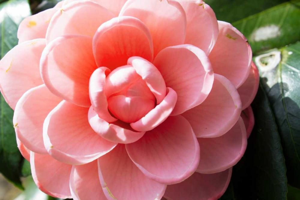 Coral Bloom Coppel, Anna 123695