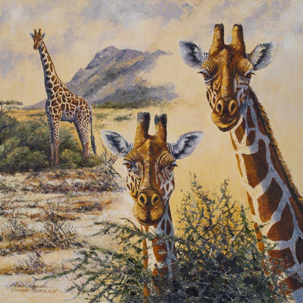 Safari IV Blackwell, Peter 51806