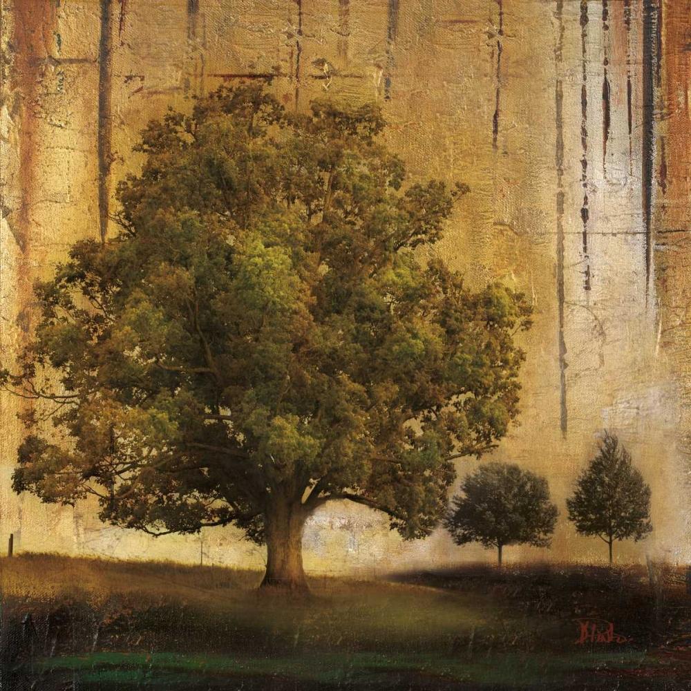 Aged Tree II Pinto, Patricia 23567