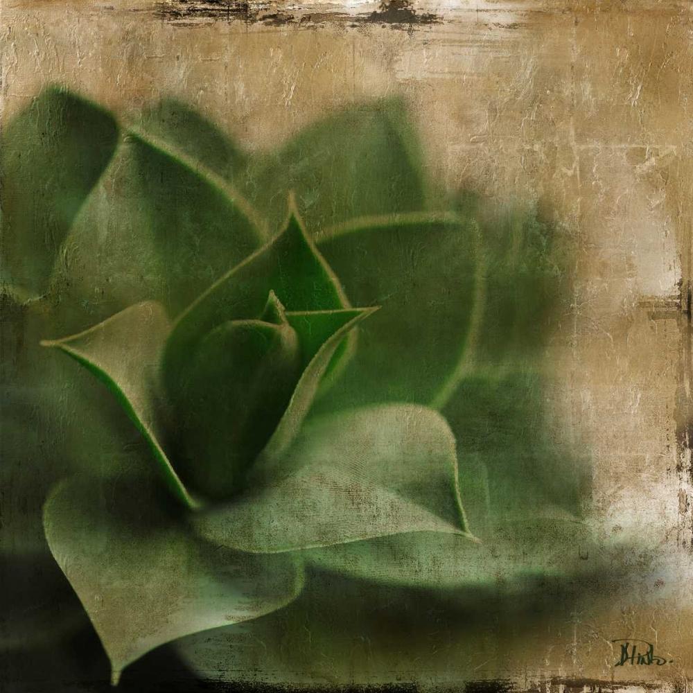 Succulent II Pinto, Patricia 15380