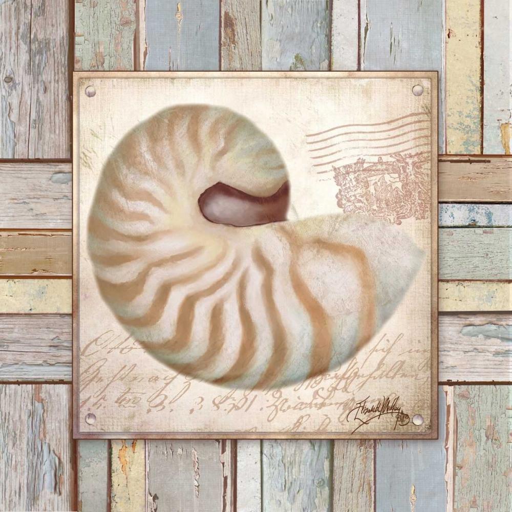Beach Shell III Medley, Elizabeth 32445