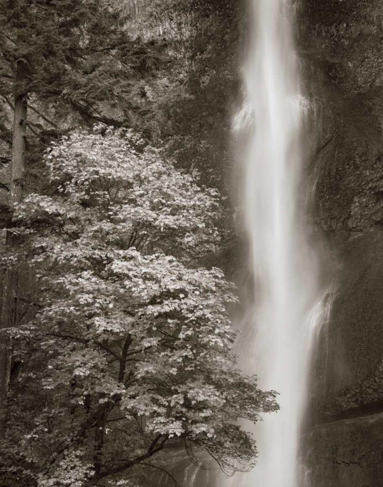 Multnomah Falls Majchrowicz, Alan 17427