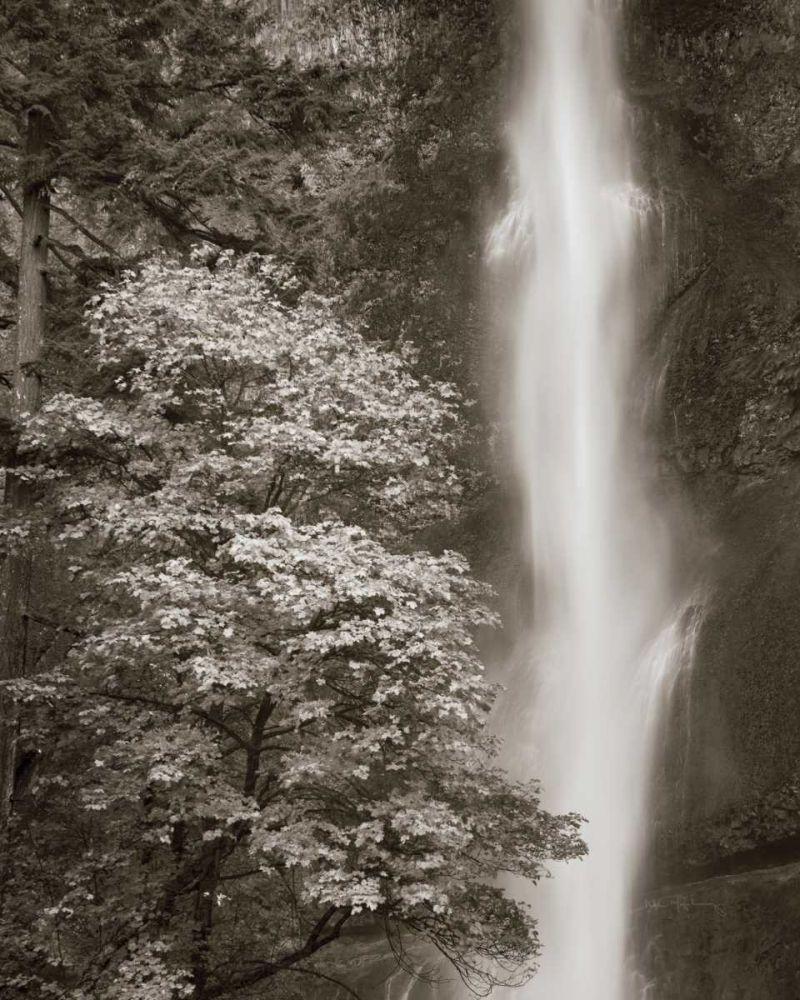 Multnomah Falls Majchrowicz, Alan 33479