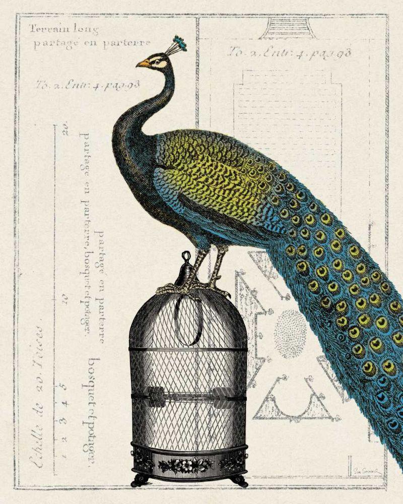 Peacock Birdcage II Schlabach, Sue 33518