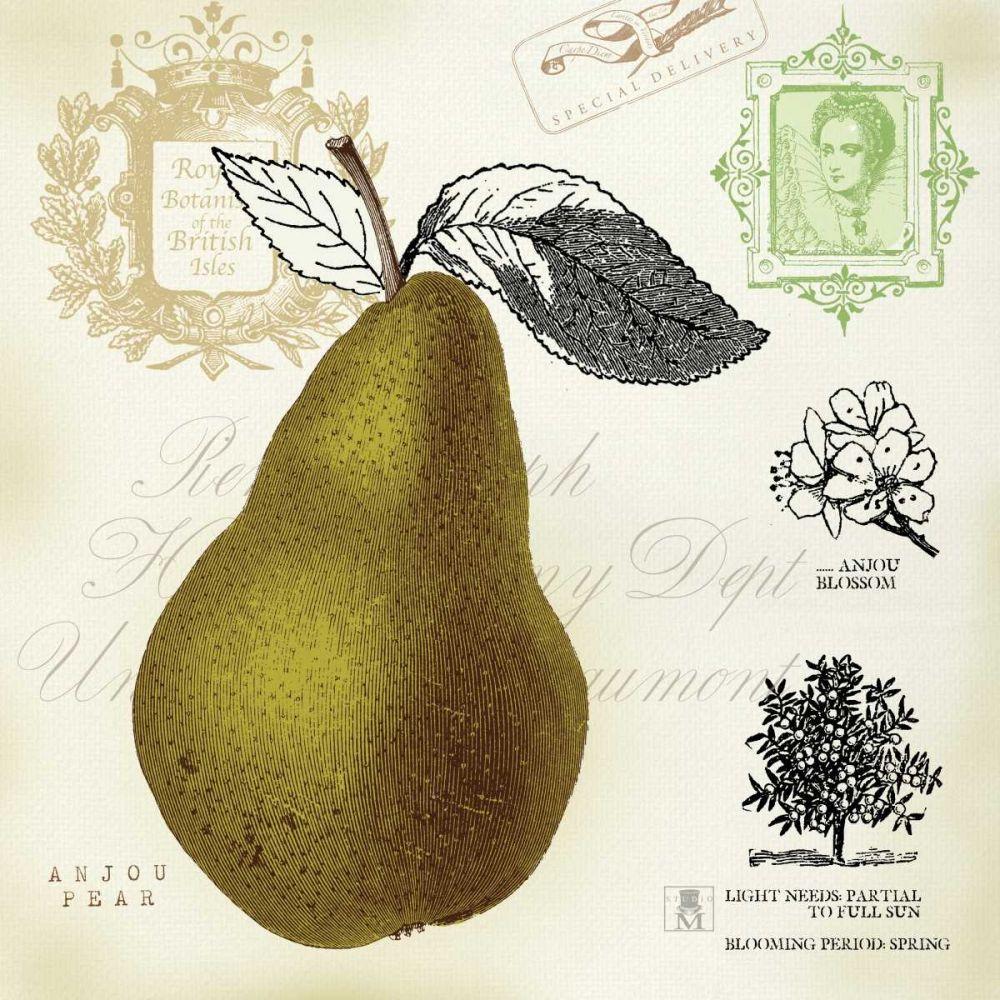 Pear Notes Studio Mousseau 17182