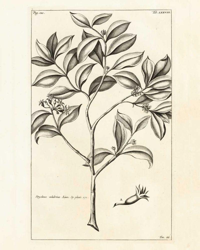 Tropical Leaf Study I Wild Apple Portfolio 28331