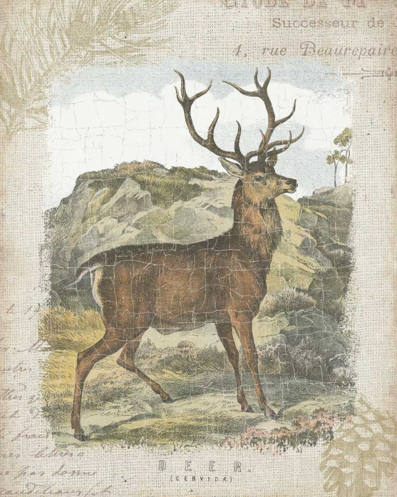 Woodland Stag I Wild Apple Portfolio 32304