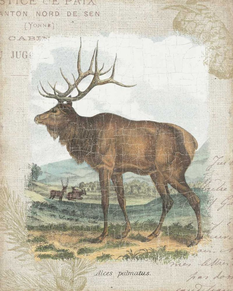 Woodland Stag II Wild Apple Portfolio 32305