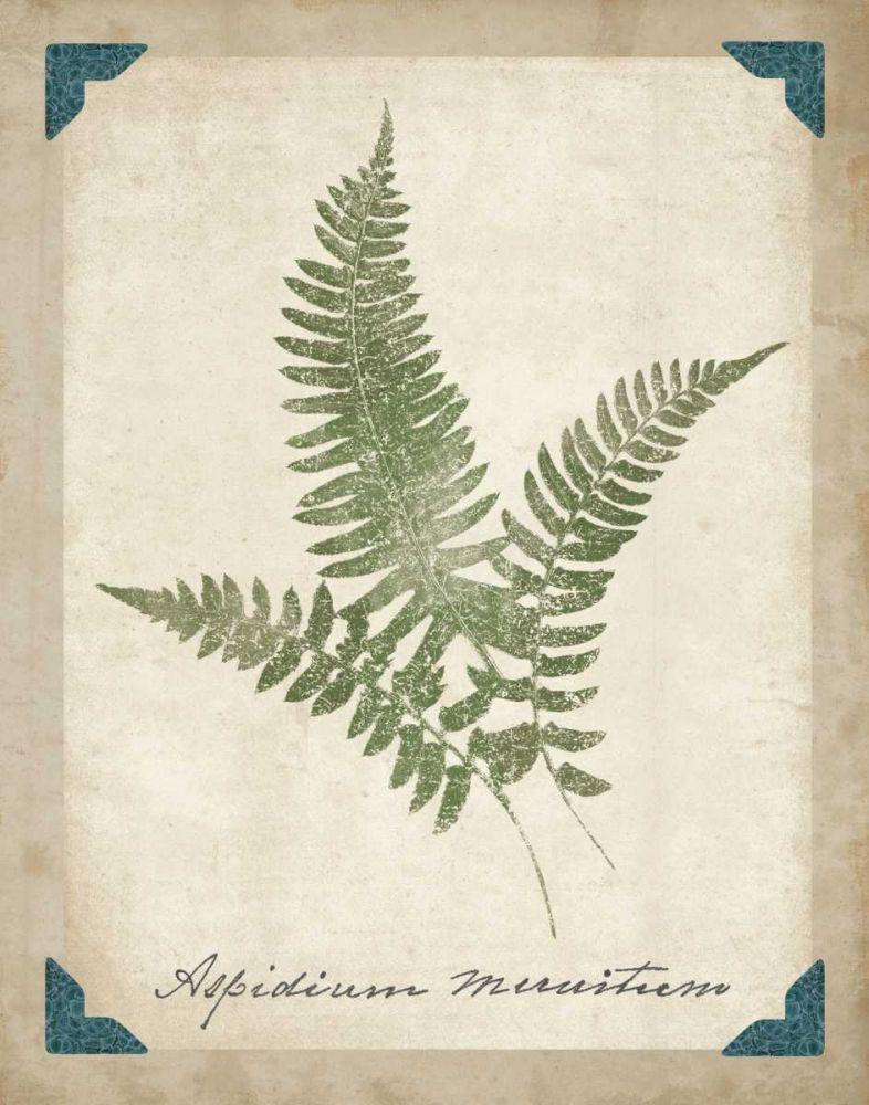 Vintage Ferns X Wild Apple Portfolio 34310