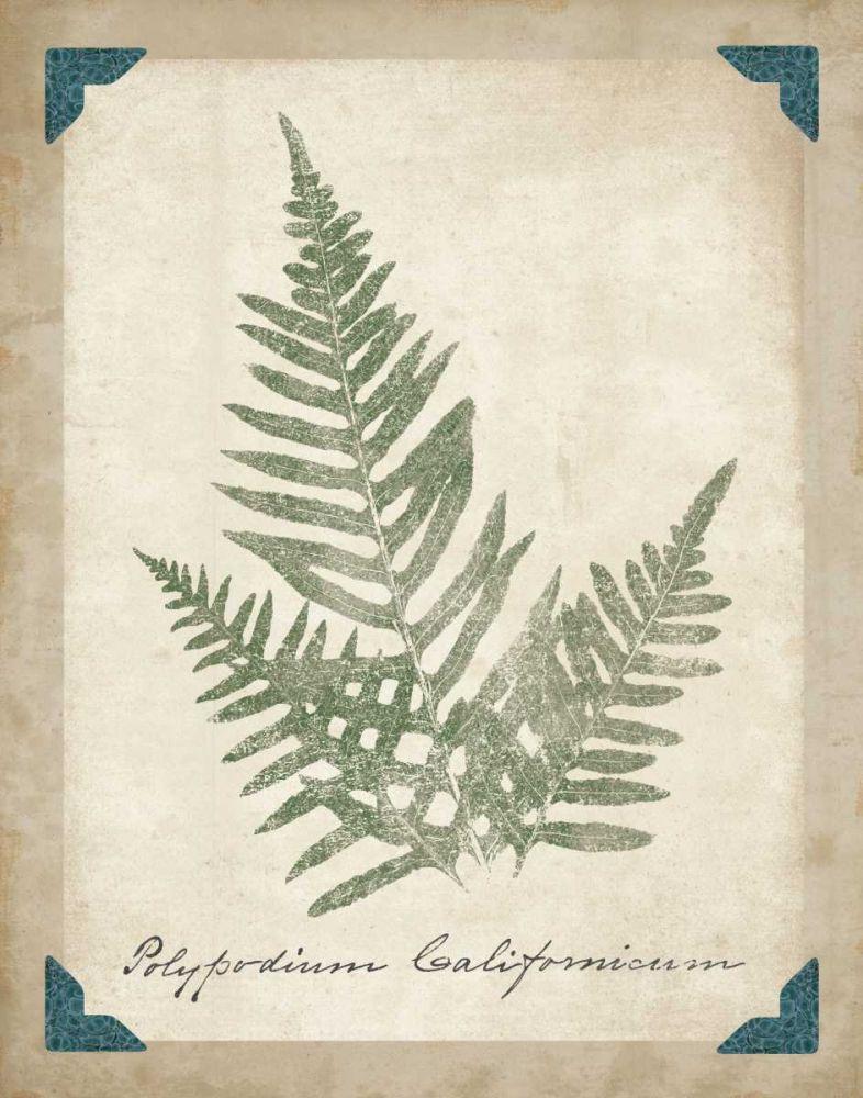 Vintage Ferns XI Wild Apple Portfolio 34311