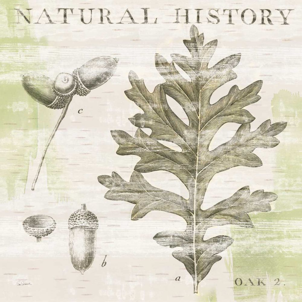 Natural History Oak II Schlabach, Sue 73884