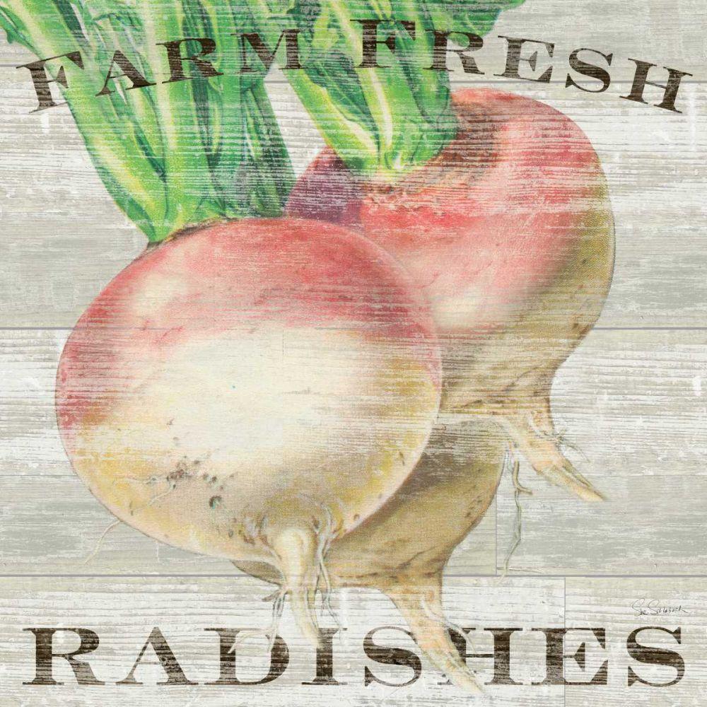 Farm Fresh Radishes Schlabach, Sue 71998