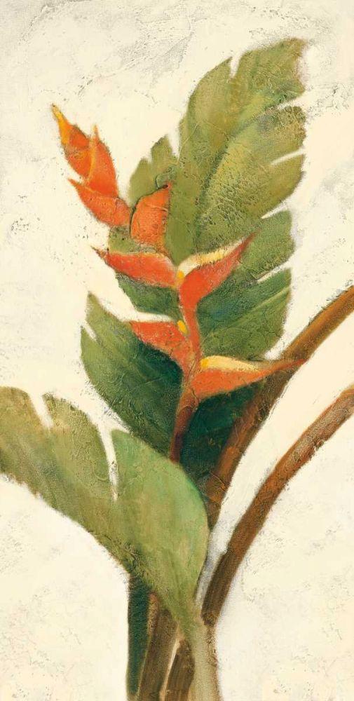 Halconia Blossom on White Hristova, Albena 93327