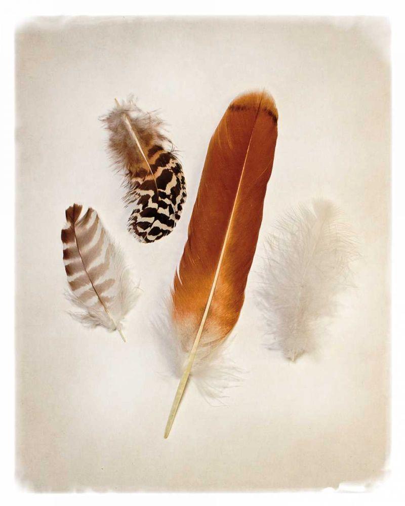 Feather Group I Van Swearingen, Debra 87219