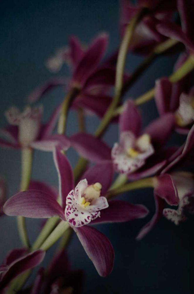 Dark Orchid III Urquhart, Elizabeth 93412
