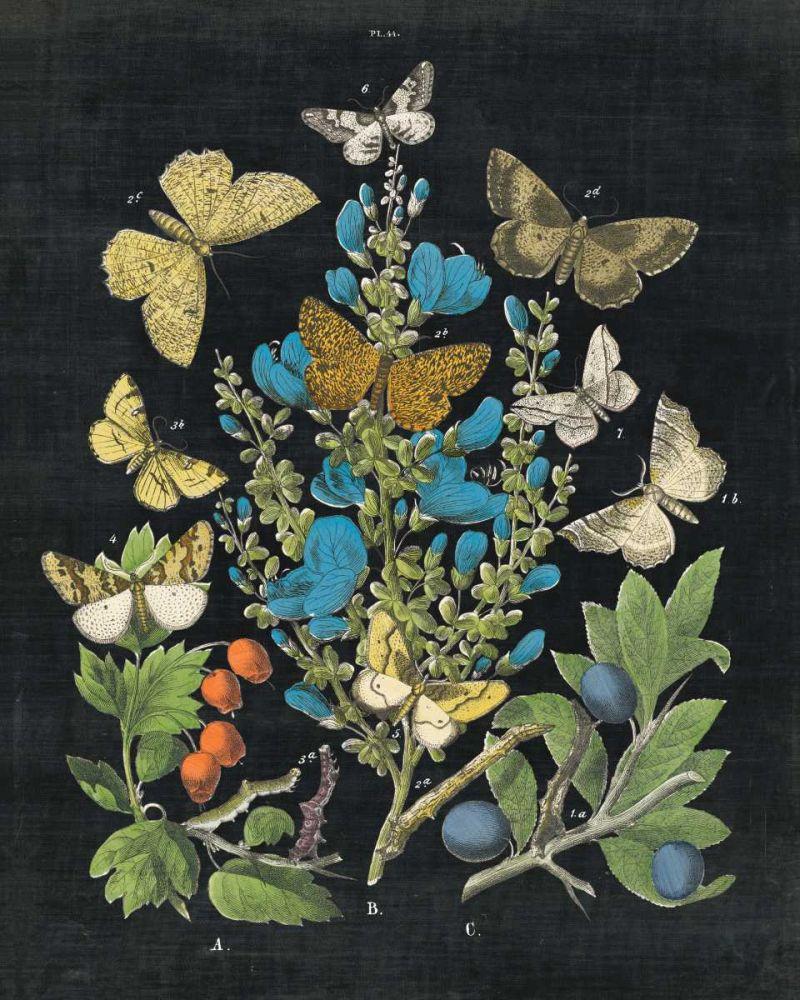 Butterfly Bouquet on Black II Wild Apple Portfolio 99548