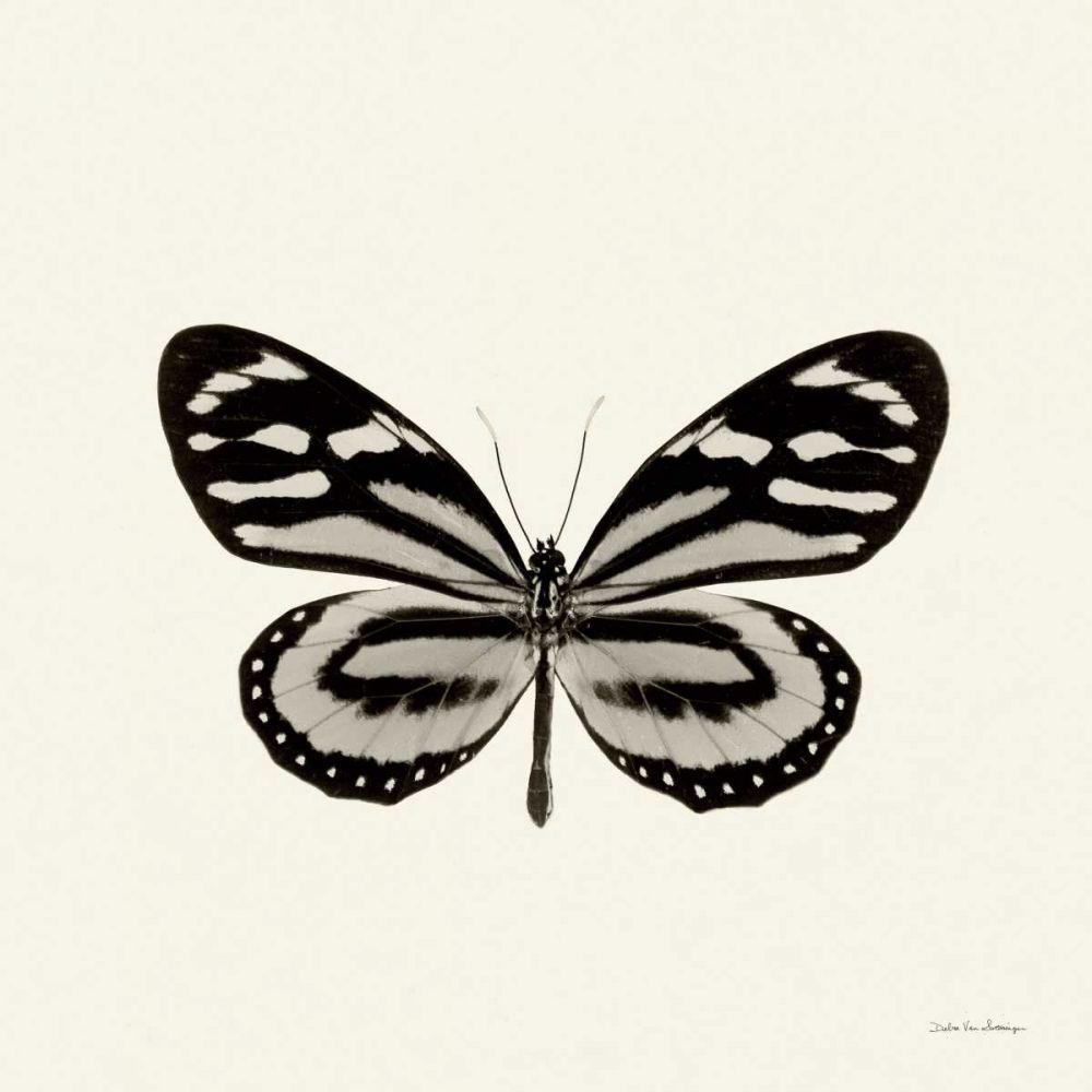 Butterfly VIII BW Crop Van Swearingen, Debra 121756