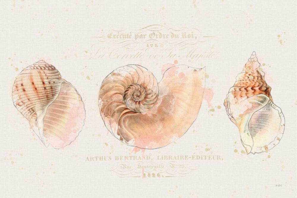 Shell Collector I Pertiet, Katie 157778