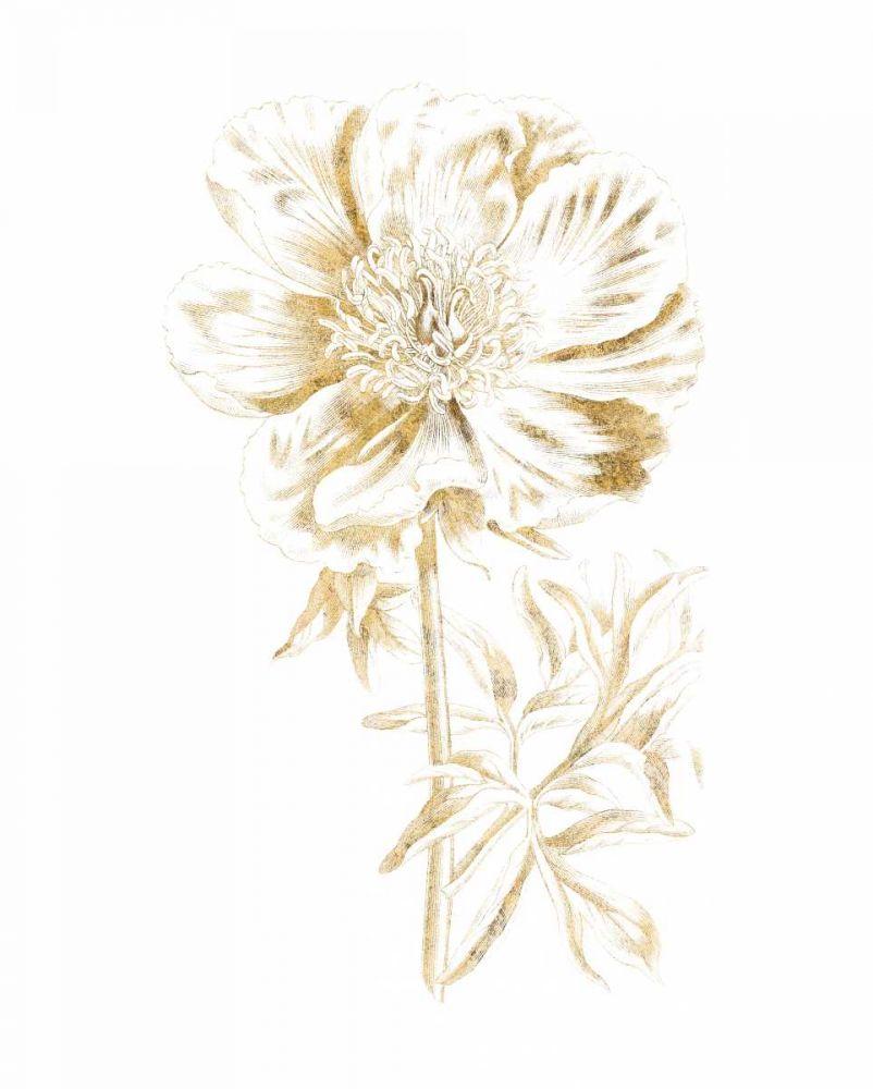 Gilded Botanical VIII Wild Apple Portfolio 163532