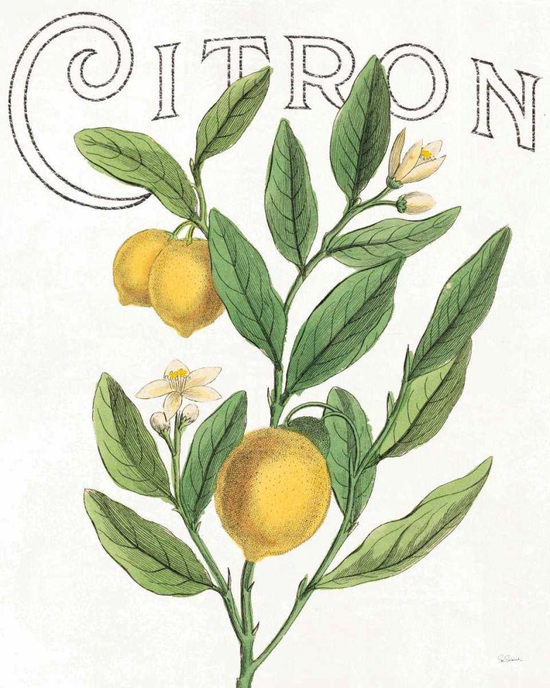 Classic Citrus V Schlabach, Sue 163578