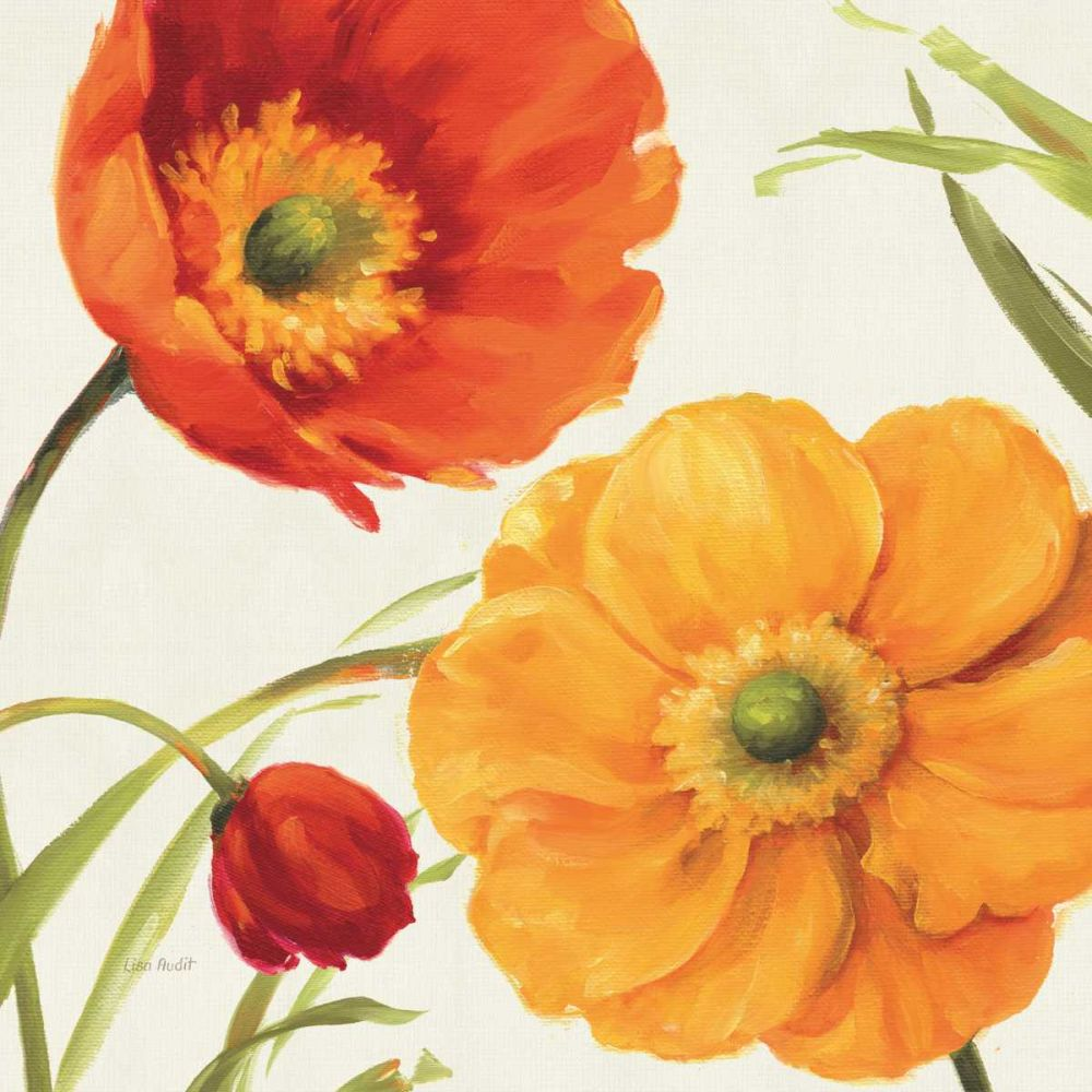 Poppies Melody II Audit, Lisa 34031