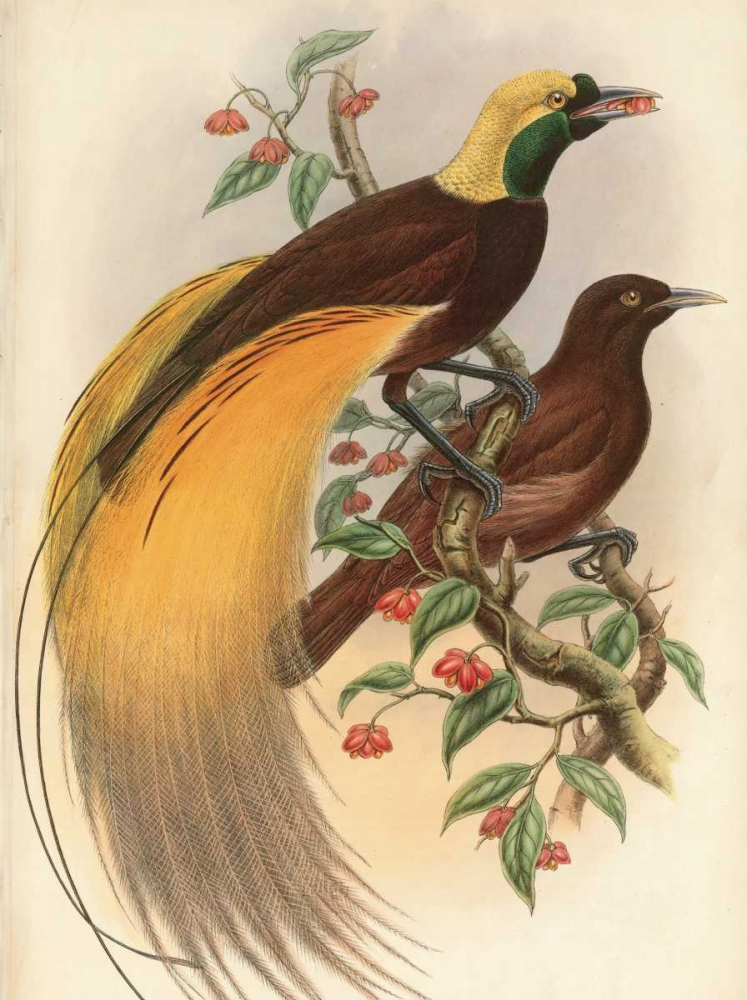 Golden Bird of Paradise Reynolds, Alastair 20416