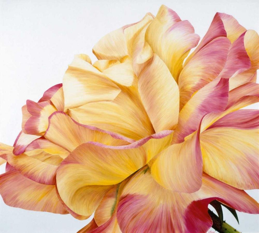 Beautiful rose Poelstra-Holzhaus, Yvonne 20868