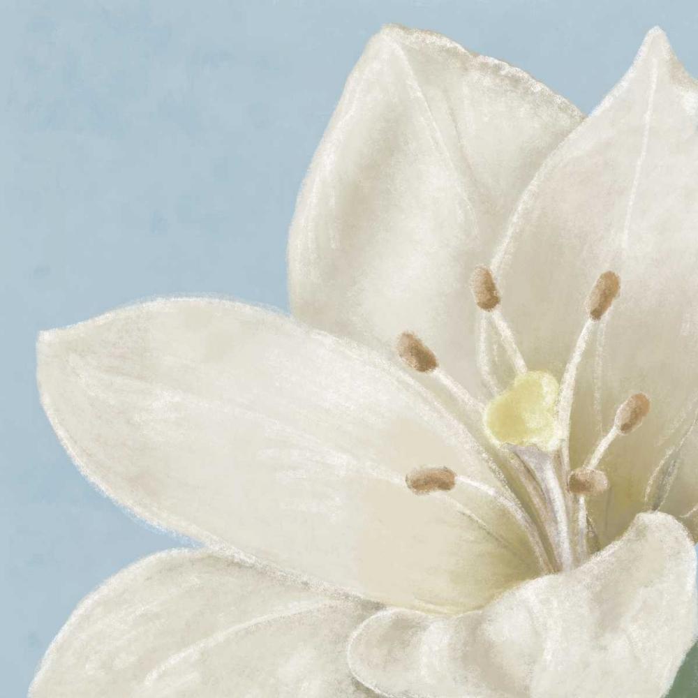 White amaryllis II Linda, Wood 48157