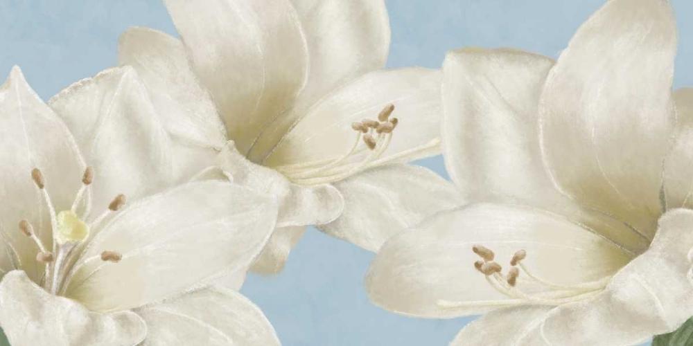 White Amaryllis III Linda, Wood 48166