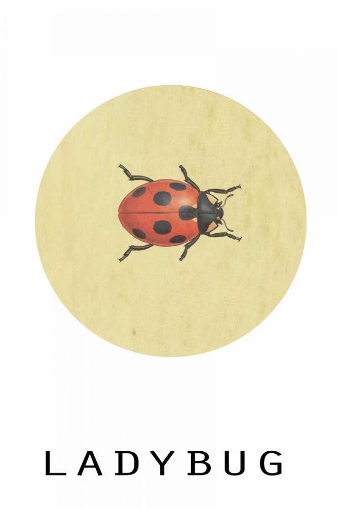 Ladybug Waltz, Anne 166080