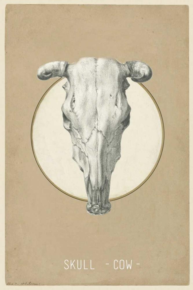 Skull Waltz, Anne 166098