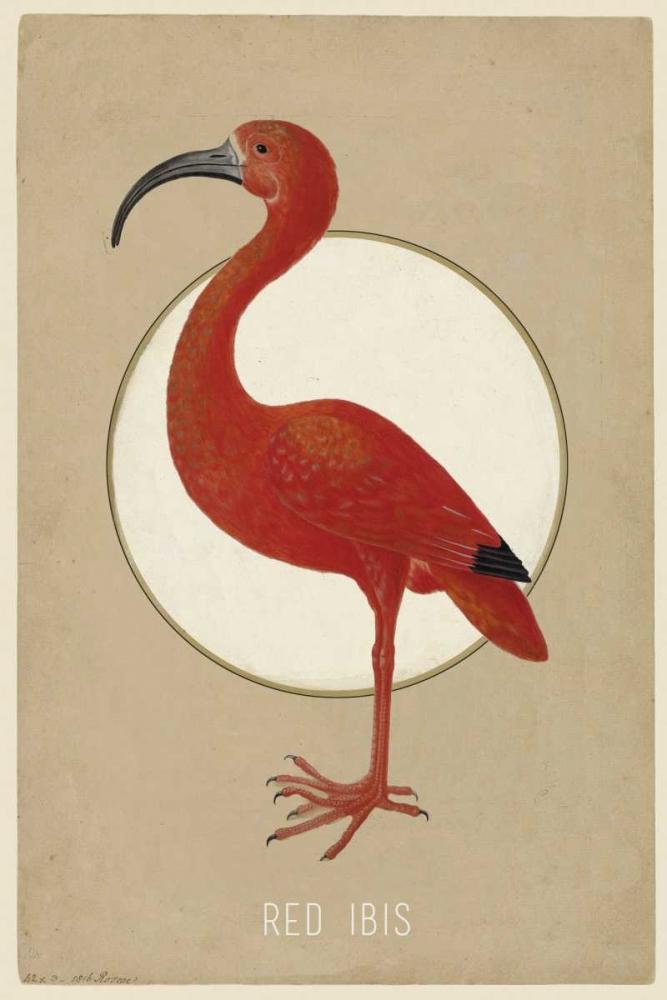 Red Ibis Waltz, Anne 166100