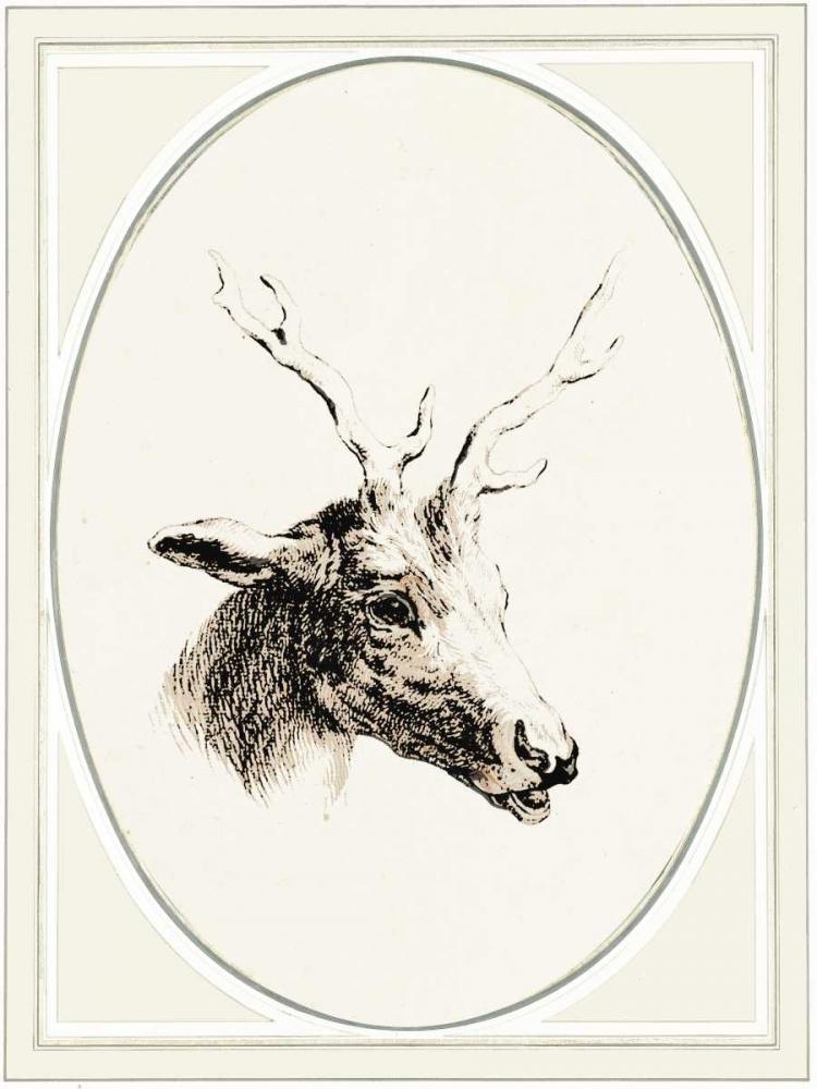 Deer I Waltz, Anne 166106