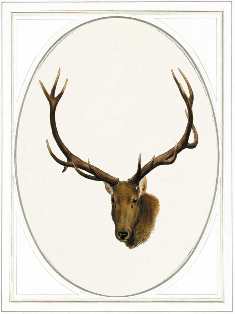 Deer II Waltz, Anne 166107