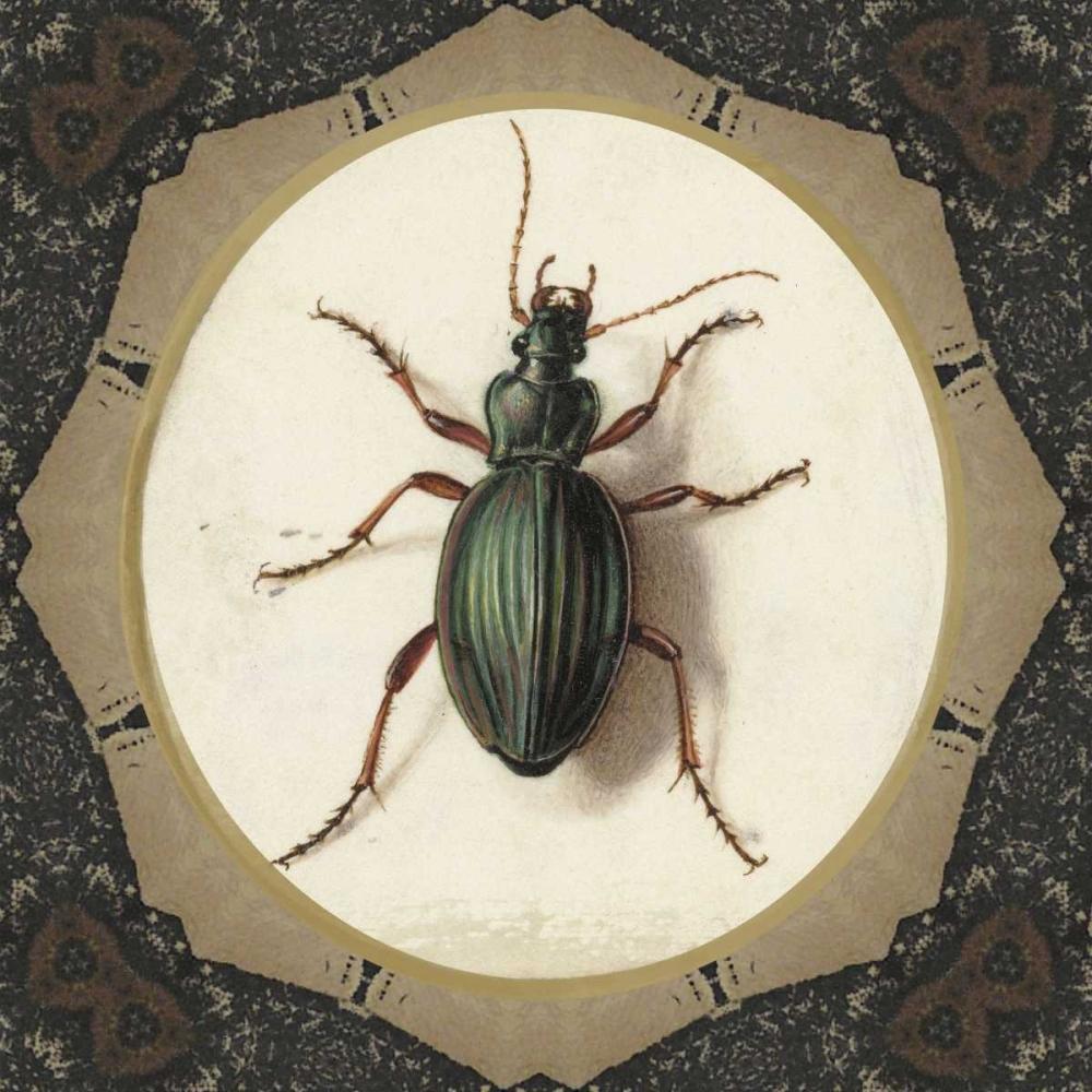 Bug me.. Waltz, Anne 166114